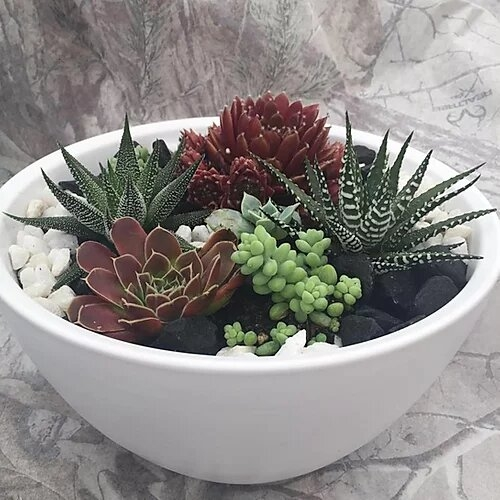 Contemporary Bowl Buy Online Or Call 01204 699333